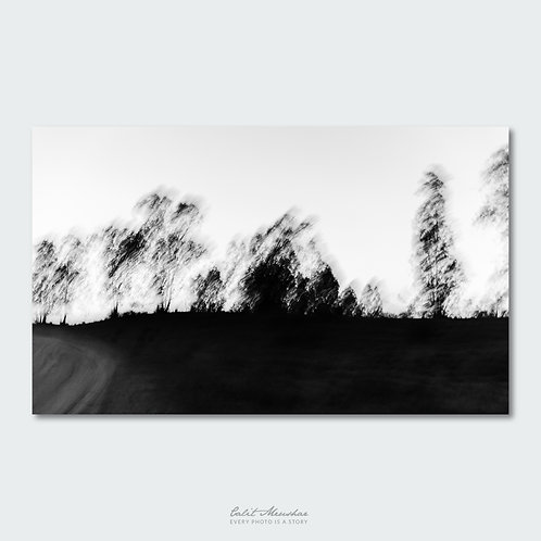 צלליות עצים, צילום שחור לבן