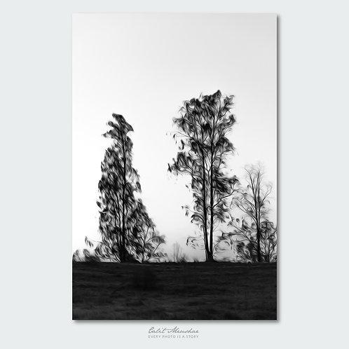 צלליות עצים בסגנון ציורי