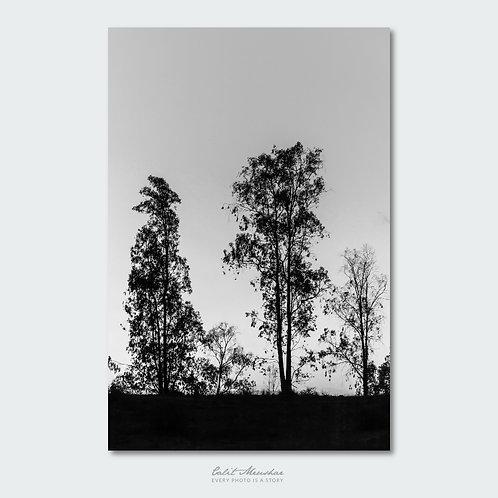 צילום עצים בשחור לבן