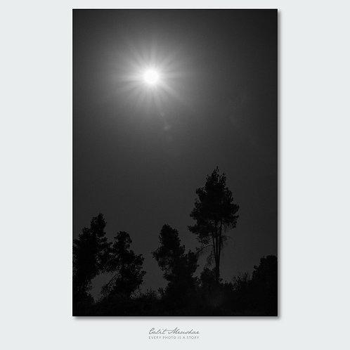 עצים בזריחה, צילום שחור לבן