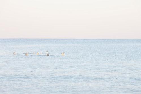 תמונת נוף - אנשים בים  6906