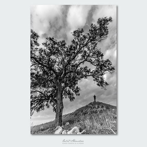 דמות על גבעה ועץ גדול, צילום בשחור לבן, תמונה למכירה