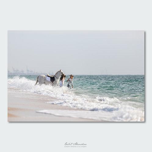 סוס ושתי בוקרות נכנסים לים