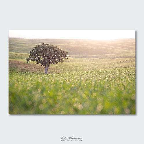 העץ הבודד בזריחה בבתרונות רוחמה