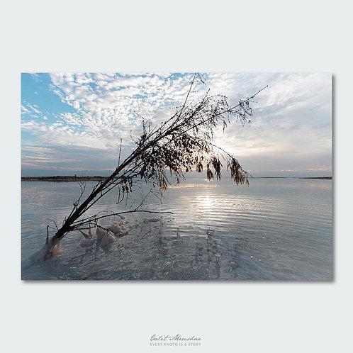 עץ בים המלח
