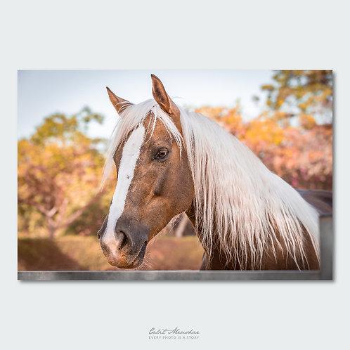 פורטרט של סוס