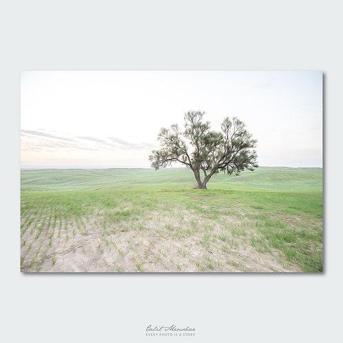 עץ בודד בתרונות רוחמה, אפקט ציורי, תמונה למשרד