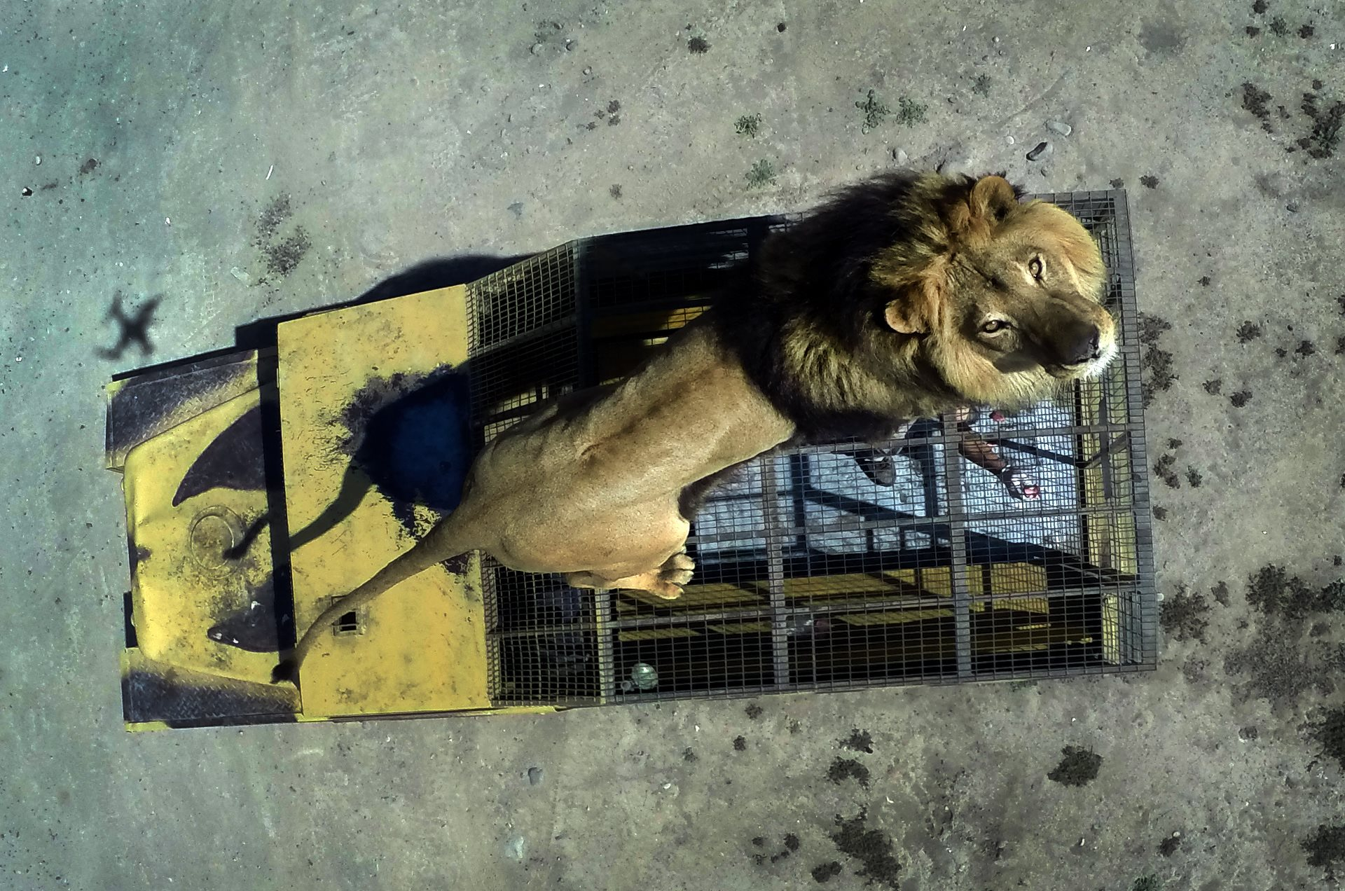 LION PARK IN RANCAGUA