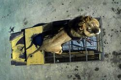 LION PARK IN RANCAGUA