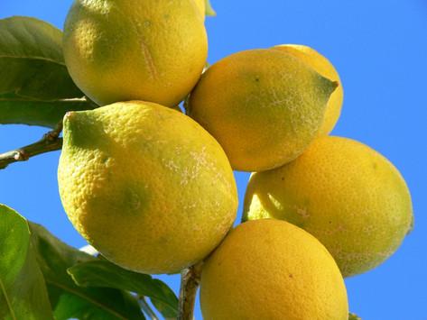 lemon (citrea)