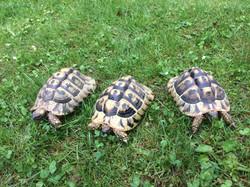 Besuch bei den Schildkröten