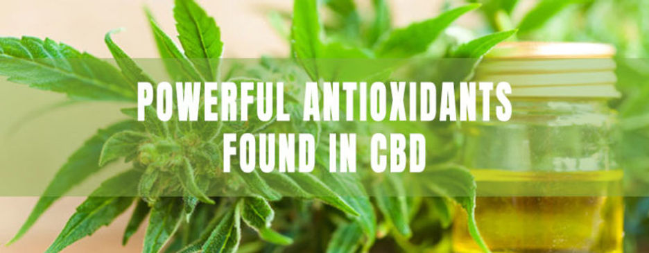 powerful-antioxidants-found-in-cbd-810x3
