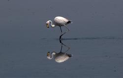 Flamingos no Espelho