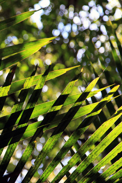 Amazônia em Palma