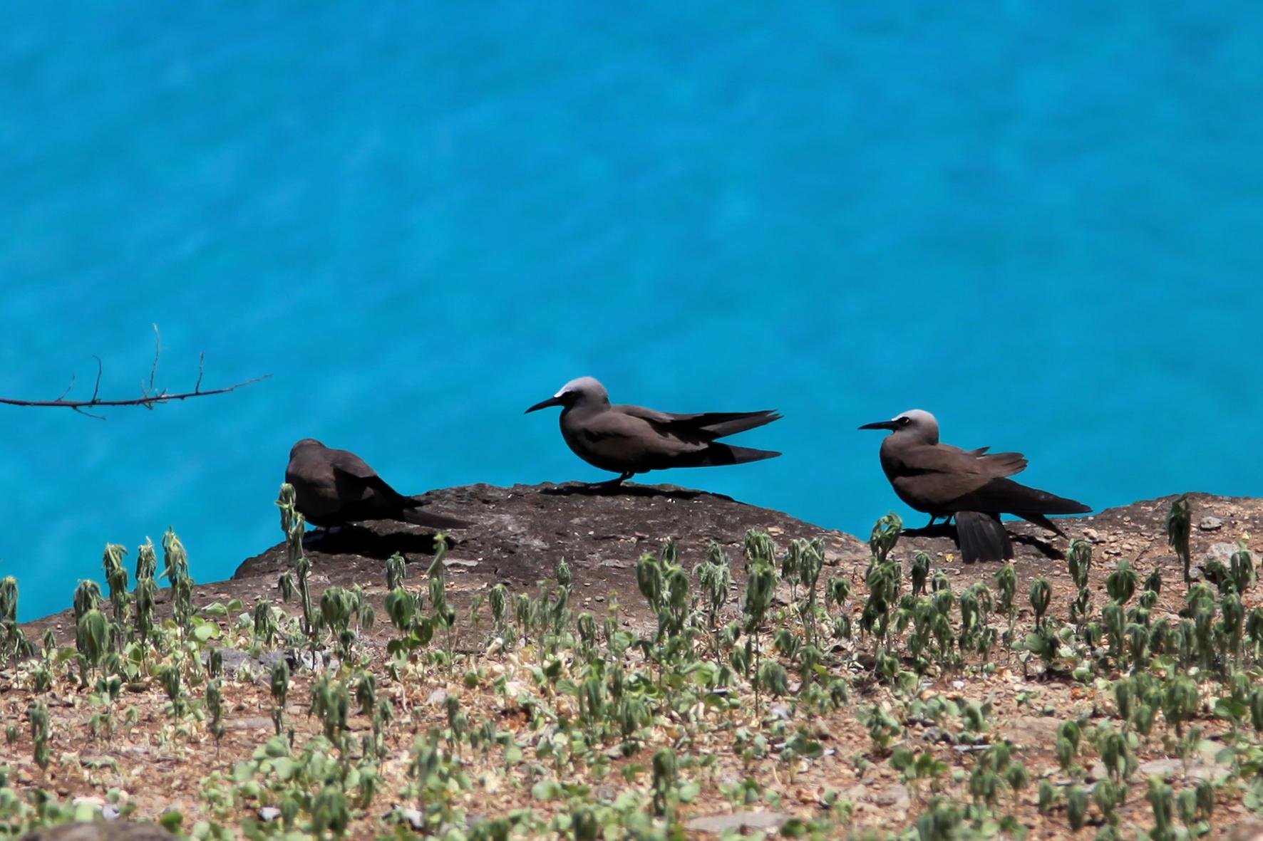 Três Pequenos Pássaros