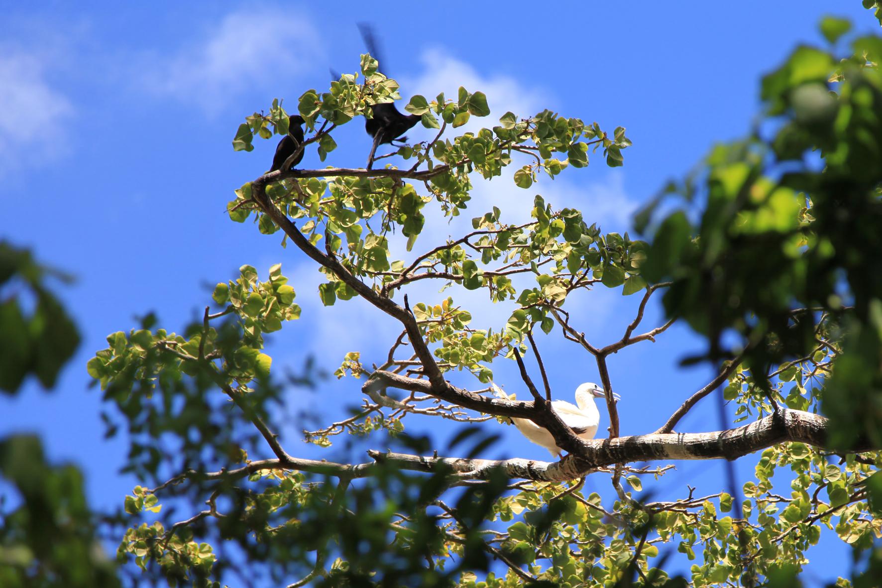 Santuário de Aves