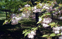 Primavera no Asahi Koen
