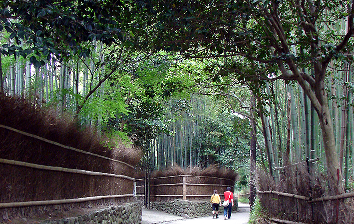 Bambu em Arashiyama - 嵐山