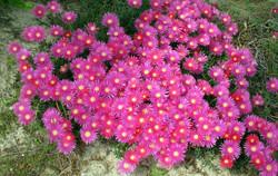 Flores em Ferreira do Zêzere