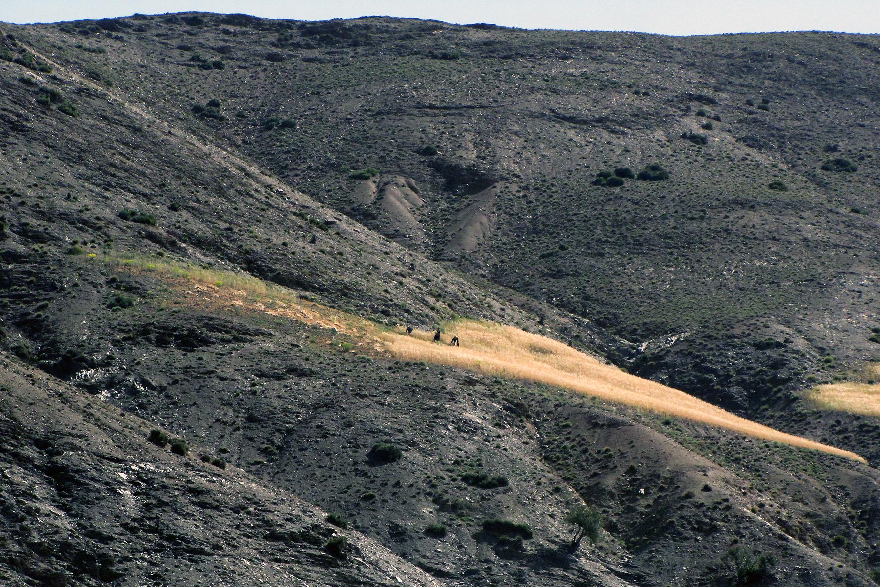 Trigo na montanha