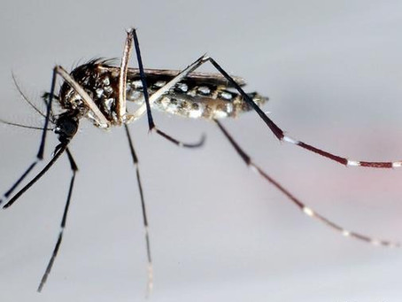 The End of Mosquitoes for Good?