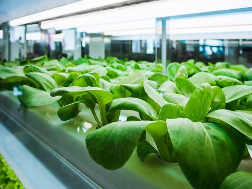 diet-nutrition_nutrition_growing-vegetab