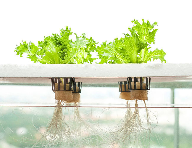 The-Best-Hydroponic-Systems-e14577399161