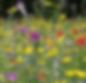 wildflowers.tiff