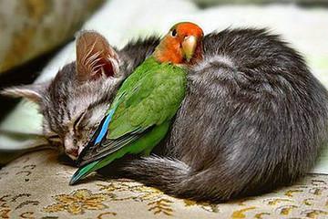 Compassion knows no religion