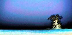Ghost tree