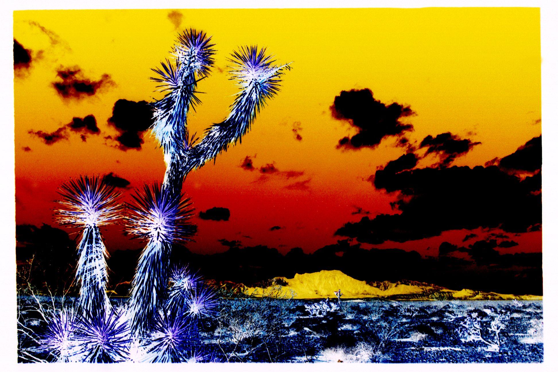 Nuclear cactus