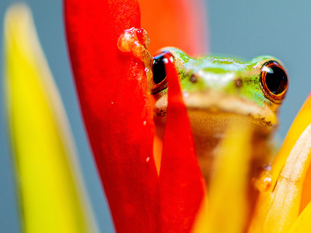 Frog DNA & The Importance of Frequent Communication