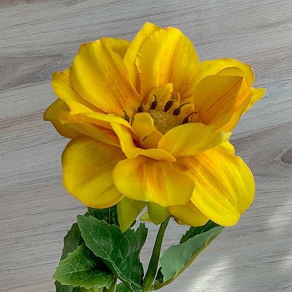 Yellow Dahilia