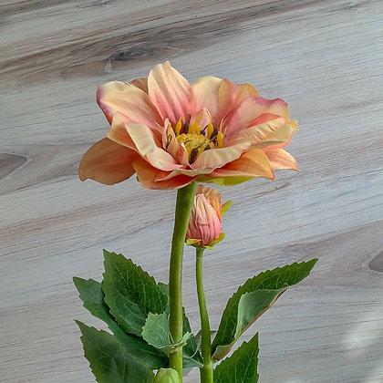 Dark Pink Dahilia