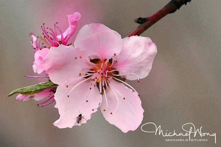 PEACH FLOWER_WEB.jpg