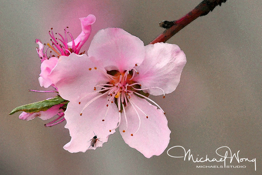 PEACH FLOWER_WEB.jpg