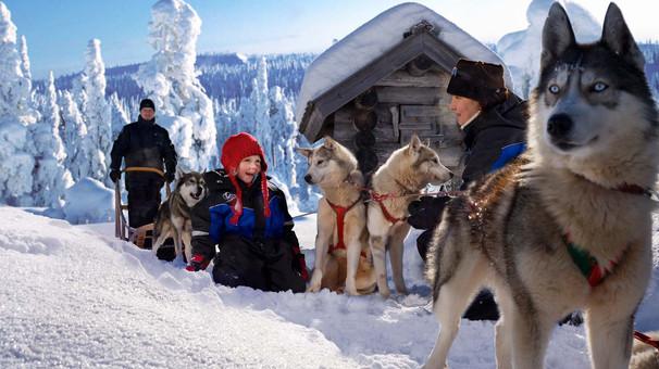 huskies-family-lapland-safaris-rovaniemi