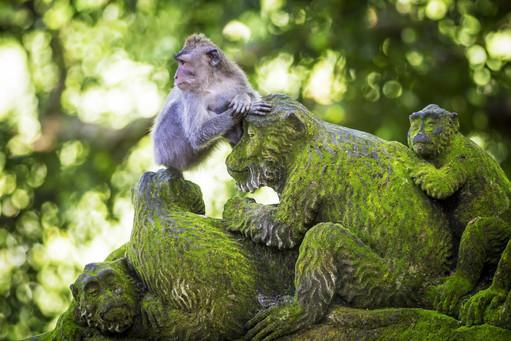 monkey-at-sacred-monkey-forest-ubud-bali