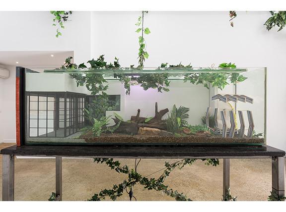 Sanaterrarium, Performance Art Festival for Frogs and Crickets, 2017, Gertrude Glasshouse. Photos Christo Crocker