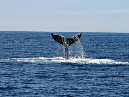 ¿Era una ballena?