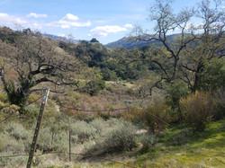 Ohlone Regional Wilderness