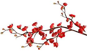 red-cherry-blossomR.jpg