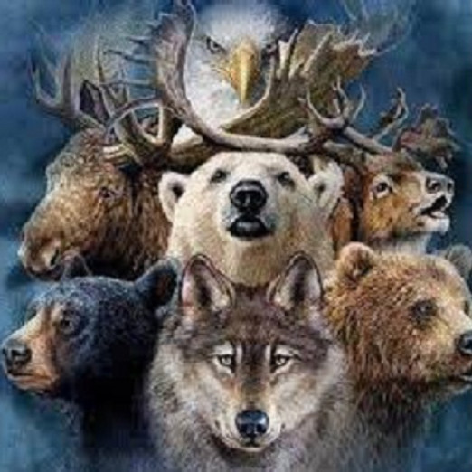 Introduction to Shamanism I Meet Your Power Animal & Learn to Journey Workshop