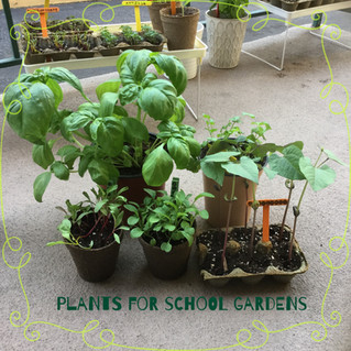 Seedlings Project to Donate to School Gardens