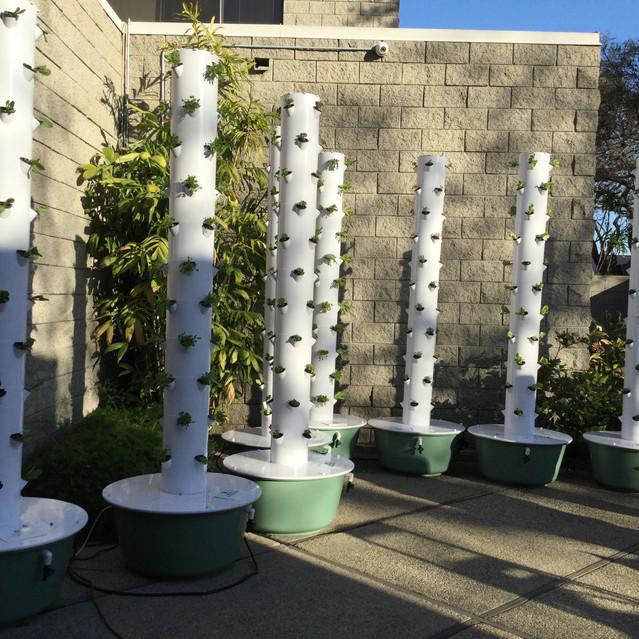 GIVE Urban Garden
