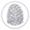 pinecone pictures logo