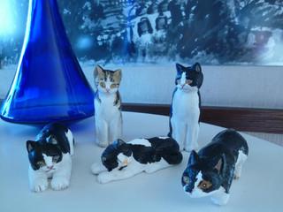 Cinco Gatitos    5匹の仔猫たち