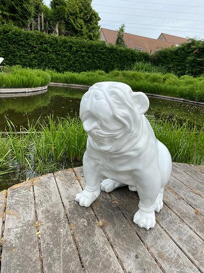 Engelse Bulldog zittend XL