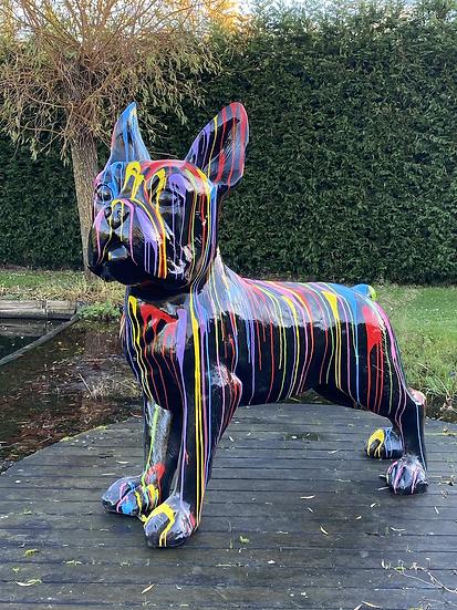 Franse bulldog druip zwart XXL