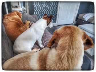 Skye, Flo & Meg